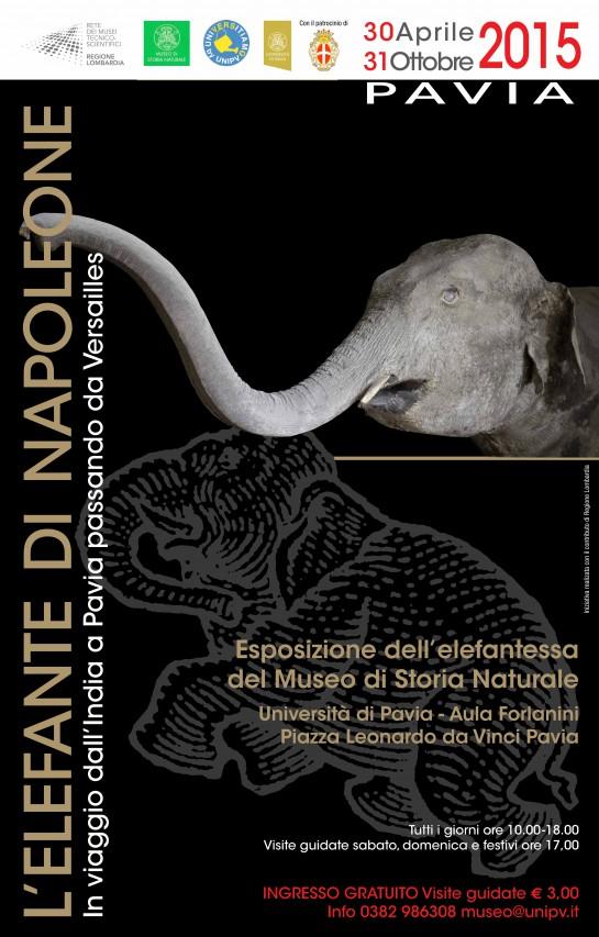 L'Elefantessa di Napoleone