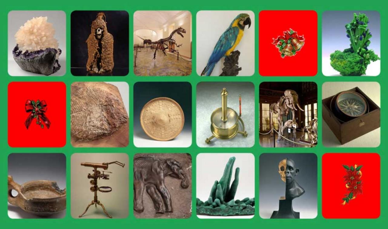 Alla scoperta delle meraviglie dei musei scientifici di Napoli