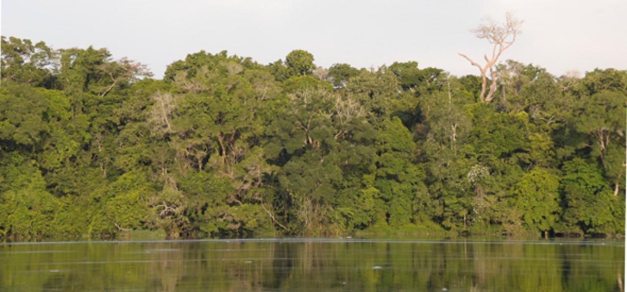 Spedizione scientifica in Gabon - marzo 2015