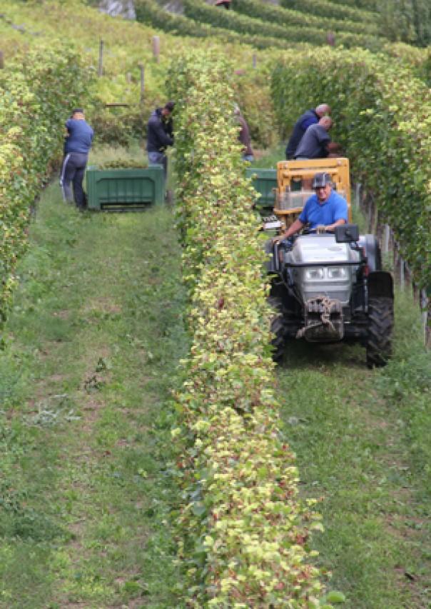 """Programma del corso: I """"nuovi contadini"""" nel Trentino del duemila"""