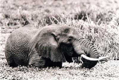 QUADRI D'AFRICA - Mostra di Storia Naturale, Immagini e campioni d'epoca e attuali della natura d'Africa a Perugia - Foto di Raffaello Pellizzon