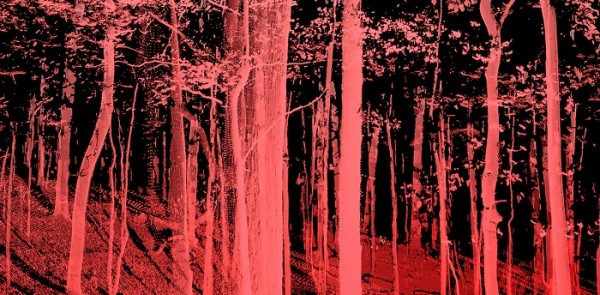 Tree Time - Arte e scienza per una nuova alleanza con la natura