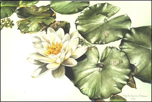 Flora, Fauna e Ambienti delle Zone Umide Italiane