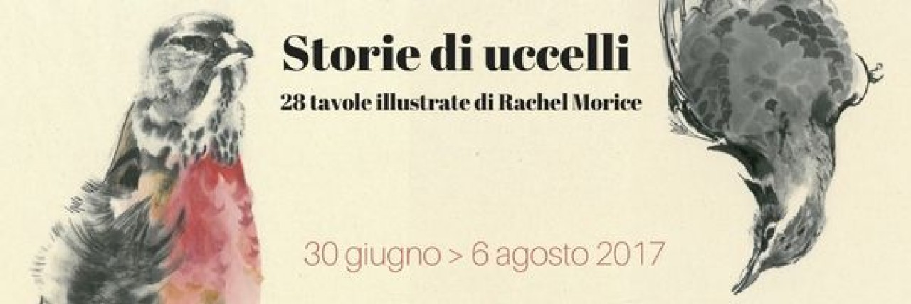 STORIE DI UCCELLI - 28 tavole illustrate di Rachel Morice