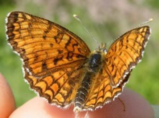 BLITZ Natura 2019: modifiche al programma del 23 marzo