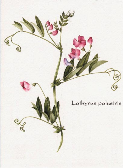 Lista rossa. Flora trentina in pericolo