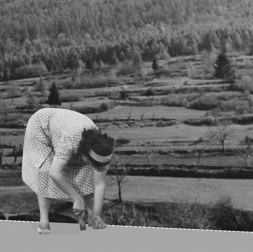 Terre Coltivate - Storia dei paesaggi agrari del Trentino