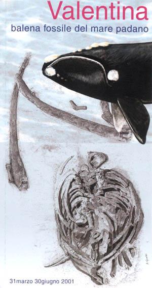 Valentina, balena fossile del mare padano