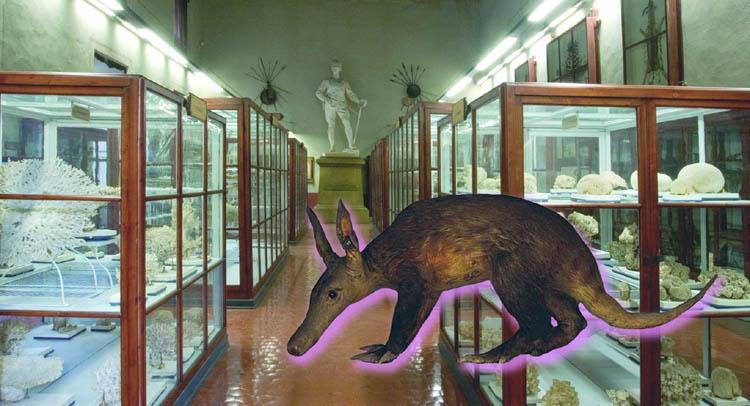 Il Museo Eritreo Bottego compie cento anni