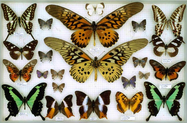 2)?La fabbrica delle farfalle? di Gioconda Belli