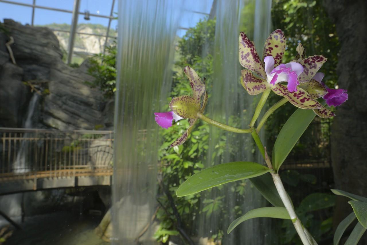 Orchidee: un mondo di colori e profumi tropicali