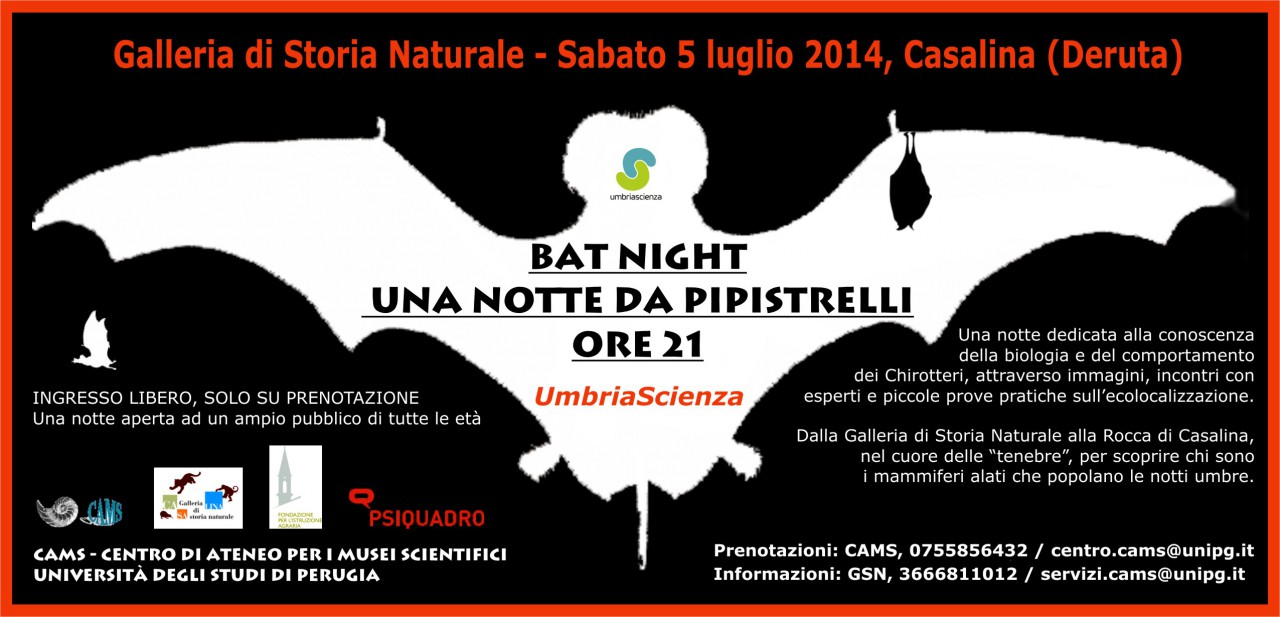 BAT-NIGHT 2014