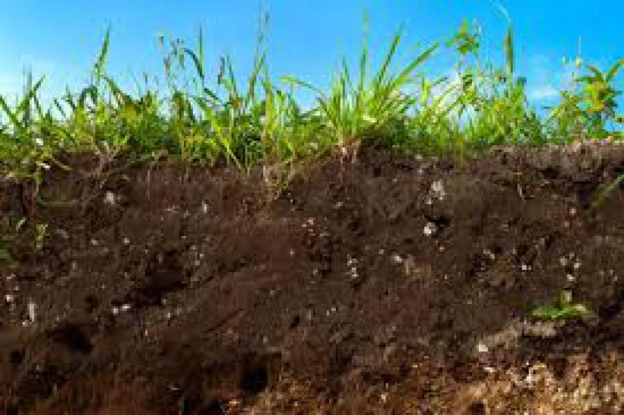 Ricetta di suolo: Come è fatto e come si è formato il suolo sul quale camminiamo? Scopriamo insieme qual'è la sua