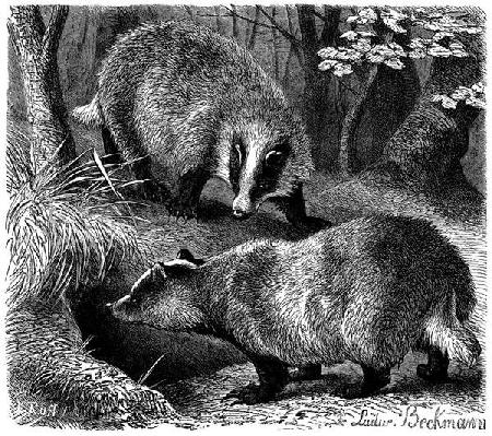 Alla scoperta dei mammiferi. Guardare la natura con gli occhi dei ricercatori