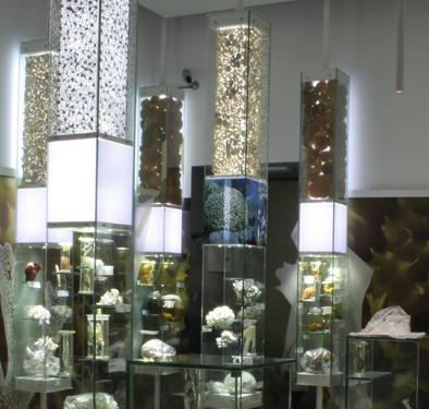 Museo di Storia Naturale di Venezia - inaugurazione sezione