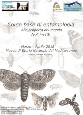Corso base di entomologia
