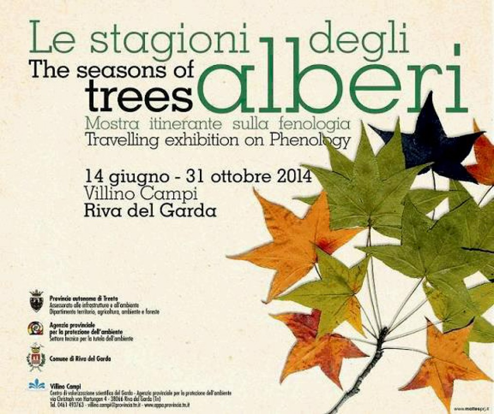 Le stagioni degli alberi