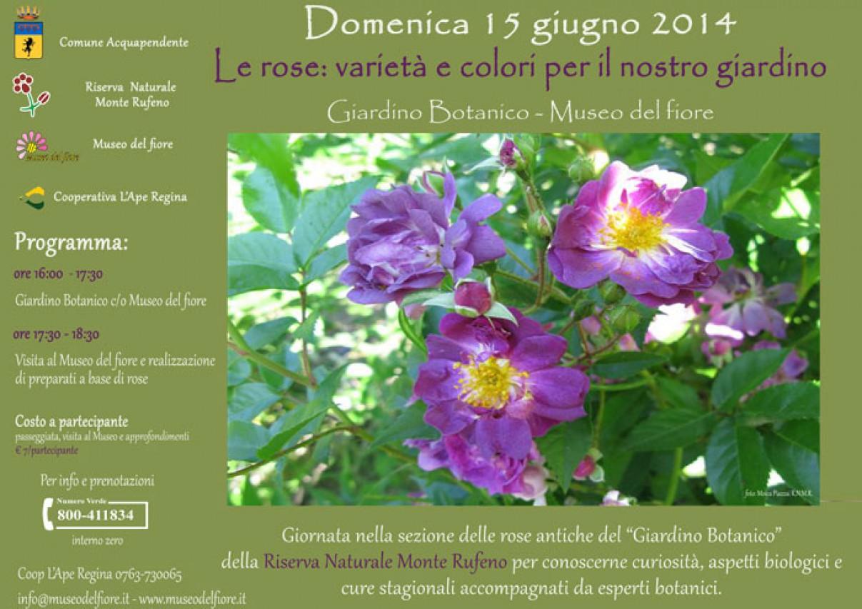 Le rose: varietà e colori per il nostro giardino