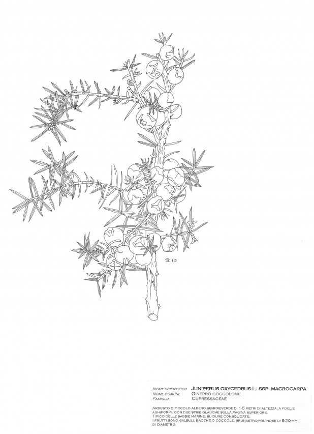 """Ars botanica"" nei disegni di Sergio Casini e in antichi libri botanici"
