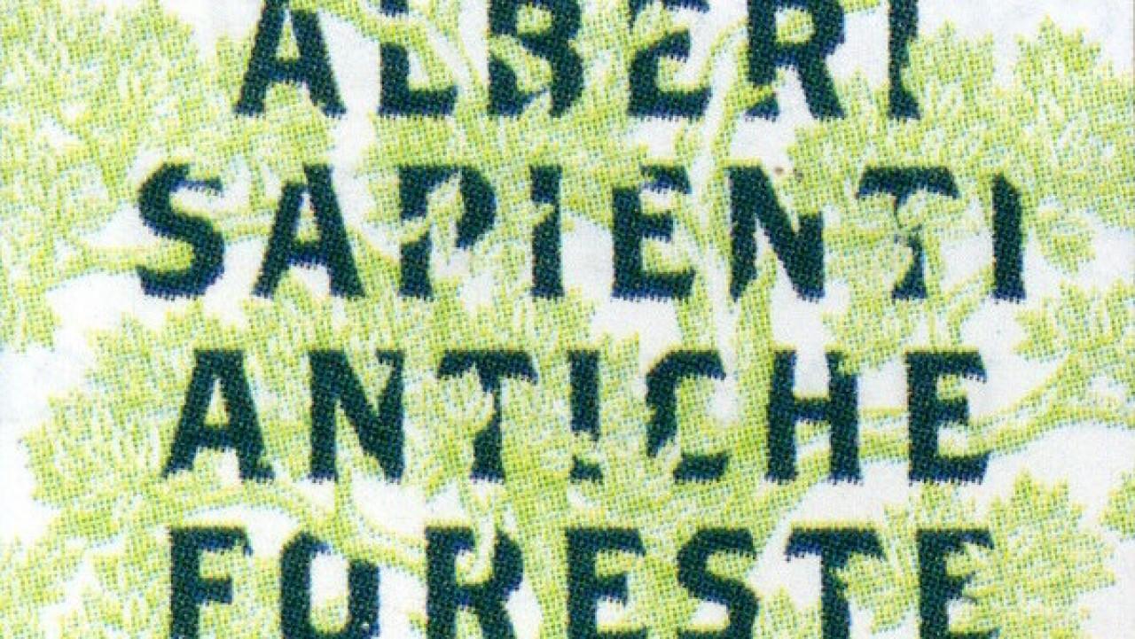 ALBERI SAPIENTI ANTICHE FORESTE: come guardare, ascoltare e aver cura del bosco