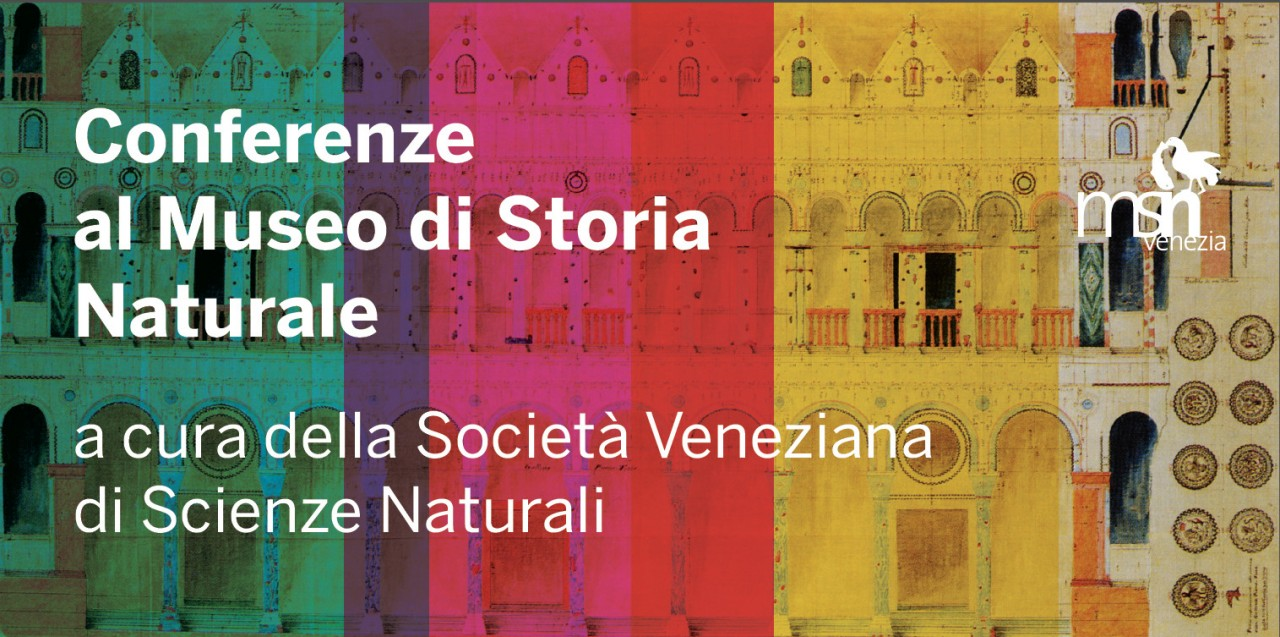 CONFERENZE AL MUSEO - autunno 2018