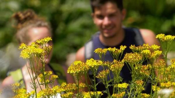 Sboccia l'ottantesima primavera del Giardino Botanico. Avvio delle attività domenica 3 giugno.