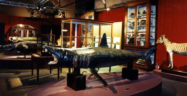 Iniziative al Museo Di Storia Naturale di Pavia