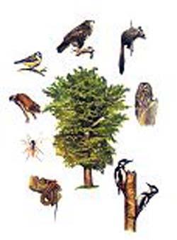 Biodiversità in Emilia-Romagna