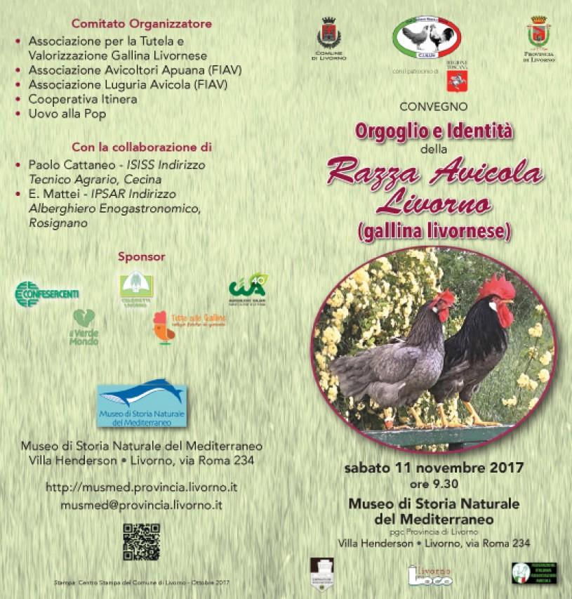 Orgoglio e identità della razza avicola Livorno