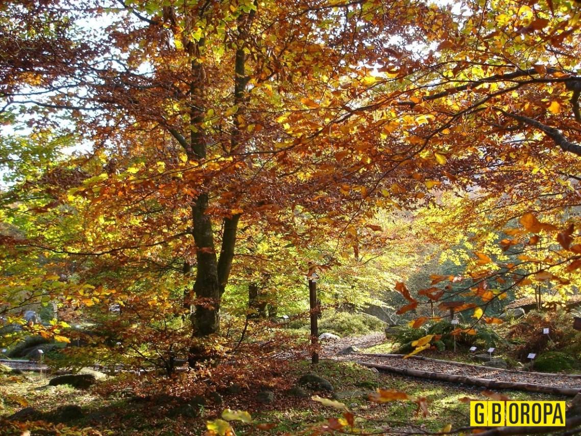 Torna Foliage al Giardino Botanico di Oropa: i colori dell'autunno nel Biellese