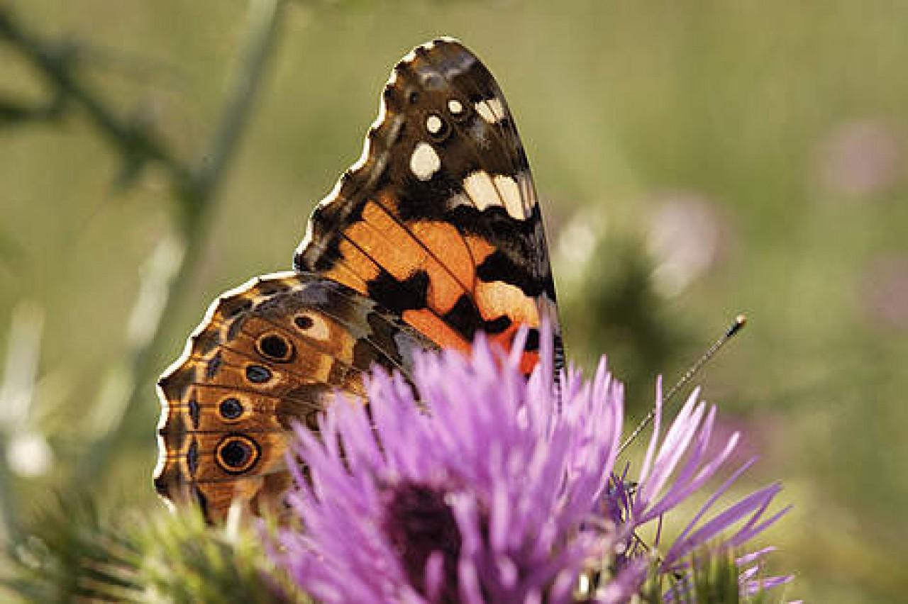 Il mese delle Farfalle al Giardino Botanico di Oropa