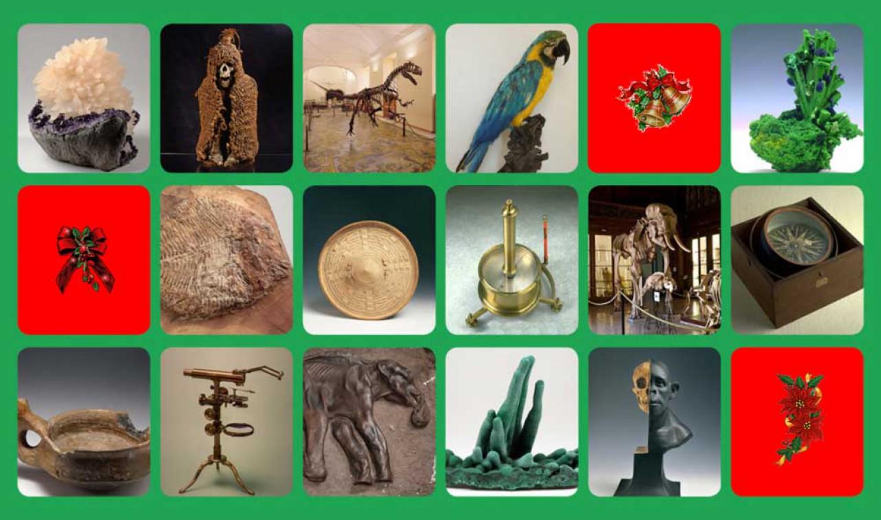 Scopriamo le meraviglie custodite nei musei scientifici della città di Napoli