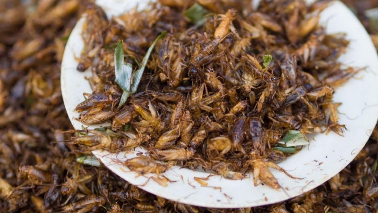 Nutrirsi e curarsi con gli insetti