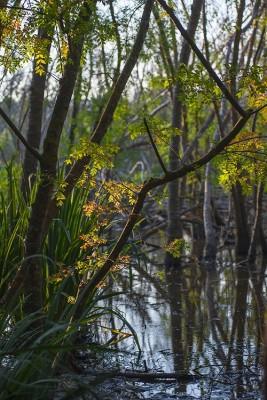 Uscito numero speciale di ETRURIANATURA sulle acque termali