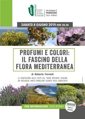 Serata botanica: il fascino della flora mediterranea