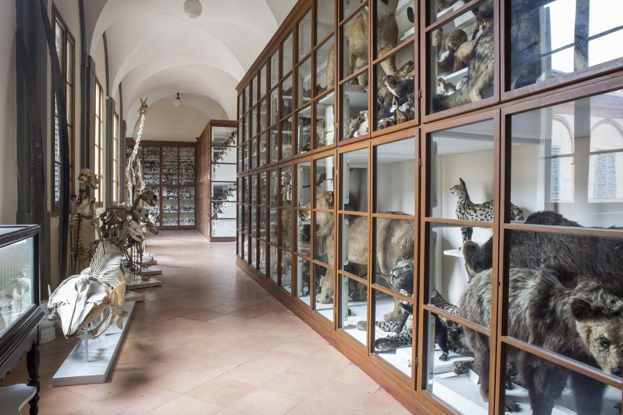 APERTURE STRAORDINARIE AL MUSEO DEI FISIOCRITICI
