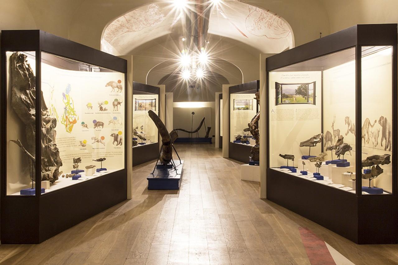 Il Museo Paleontologico e la Biblioteca Poggiana dell'Accademia Valdarnese del Poggio riaprono al pubblico