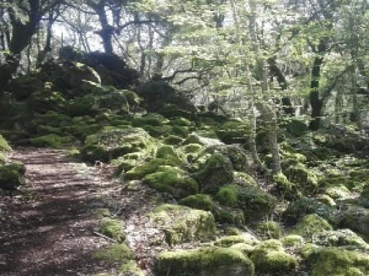 Castelli lungo la via Francigena e bosco delle fate