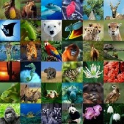 ANIMALI SPARITI SPARUTI. In mostra dal 5 al 7 ottobre 2018 nell'ambito del Festival di Internazionale