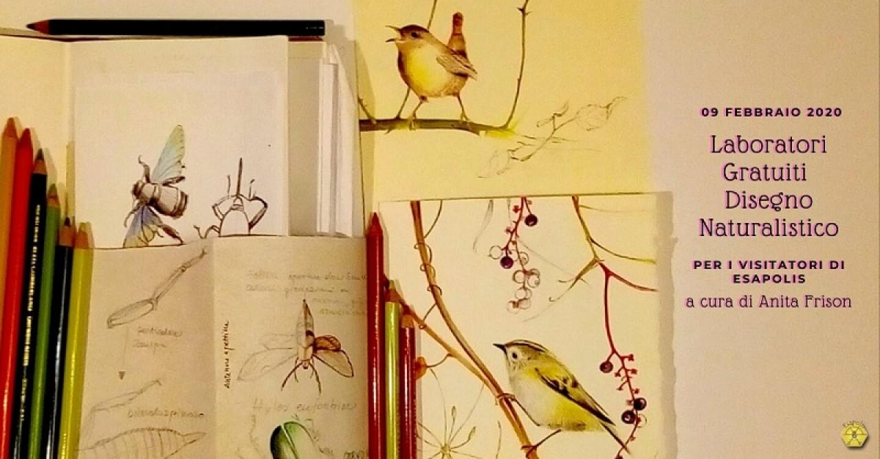 Laboratori Gratuiti di Disegno Naturalistico a Esapolis