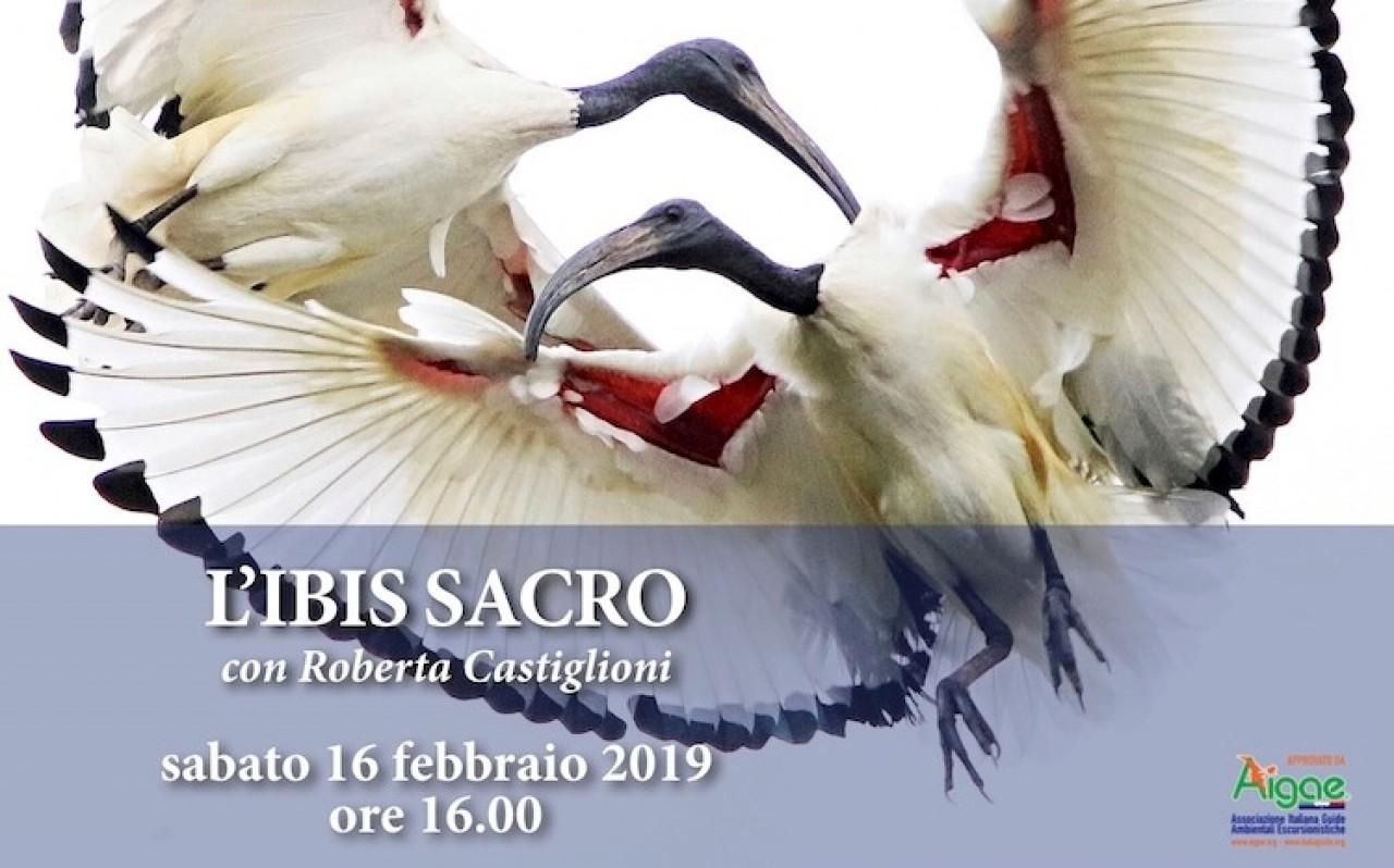 L'ibis sacro