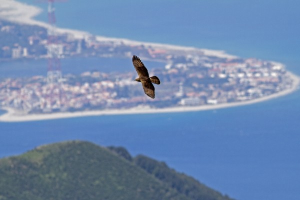 La migrazione dei rapaci attraverso il Mediterraneo