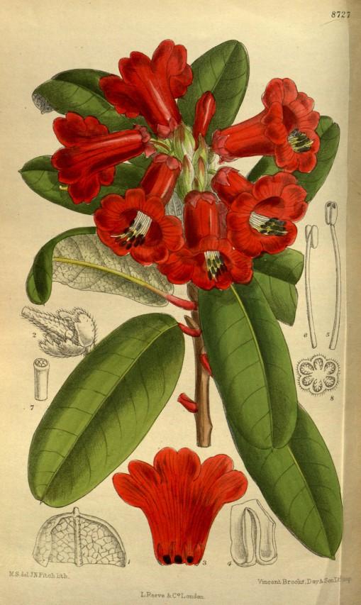COLLEZIONI MINIME A PALAZZO LASCARIS THE BOTANICAL MAGAZINE or Flower-garden displayed
