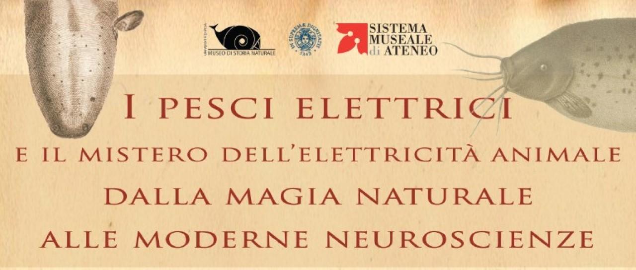 I pesci elettrici e il mistero dell'elettricità animale - conferenze