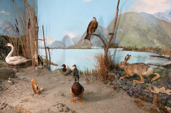 Letture naturalistiche al Museo
