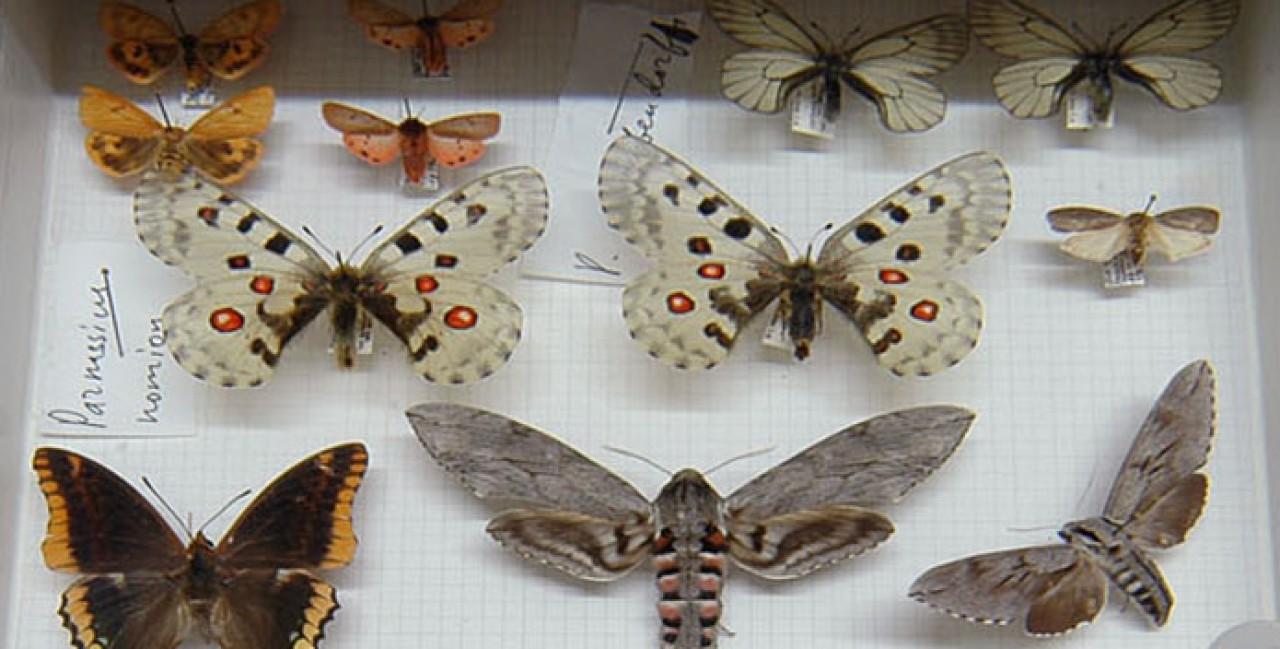 La gestione delle collezioni naturalistiche italiane