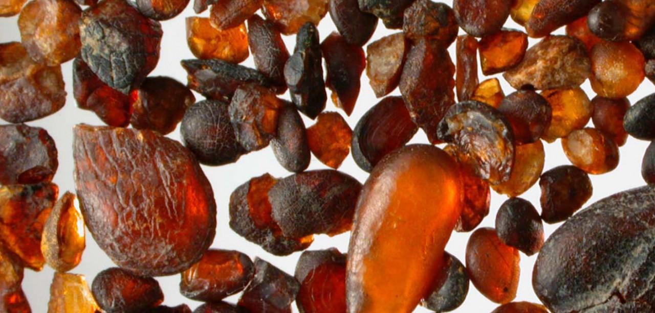 L'ambra delle Dolomiti, una storia antica 230 milioni di anni
