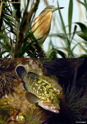 Il Milazzese tra mare e terra: biodiversità a rischio