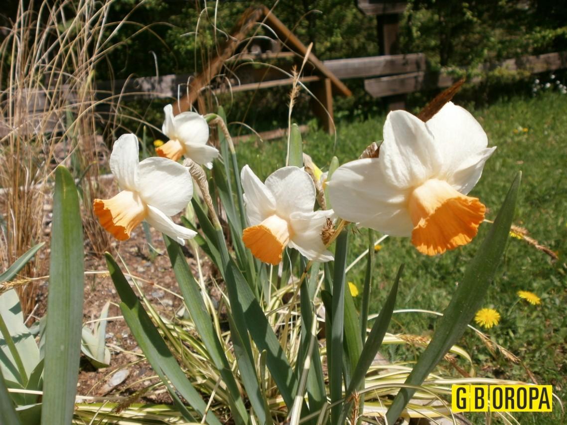 Il primo maggio apre il Giardino Botanico di Oropa