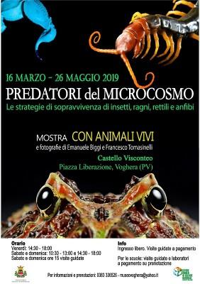 """""""I Predatori del microcosmo"""", la mostra al Castello di Voghera"""